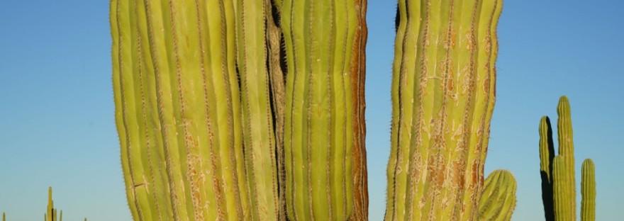Desierto de Sonora, México |Fotografía: Paty Godoy